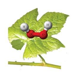acqua-ossigenata-dalle-piante.jpg