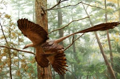 archaeopteryx-14.jpg