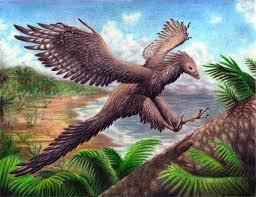archaeopteryx-15.jpg
