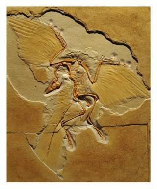 archaeopteryx-17-fileminimizer.jpg